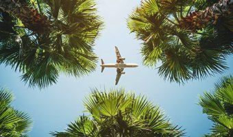 Airplane flying above palm trees.